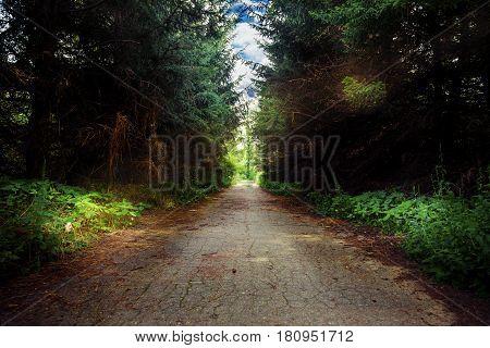 old asphalt road in the dark forest