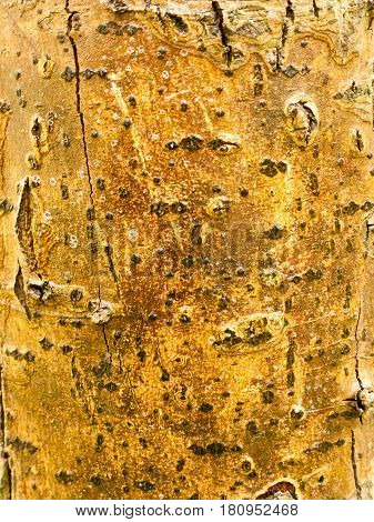 The Rough, Brown Texture Of Bark On A Tree
