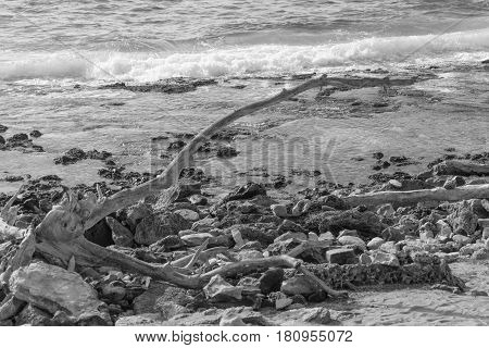 Long Piece of Drift Wood: black and white shot of a long piece of driftwood, some rocks and the ocean