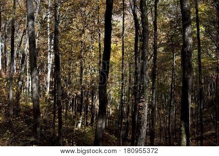 Heavily wooded gully along a hiking trail in the Fires Creek area near Murphy, North Carolina