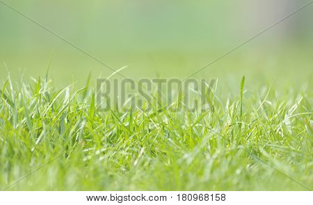 Defocused grass on field in spring time