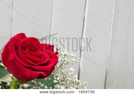 Big Red Rose