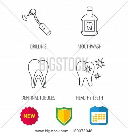 Tooth, mouthwash and dentinal tubules icons. Healthy teeth, dentinal tubules linear sign. Shield protection, calendar and new tag web icons. Vector