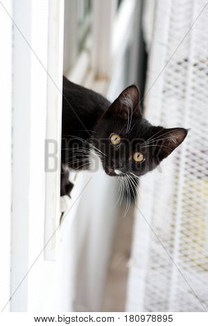 Cat finds a surprise after she crawls through a window.