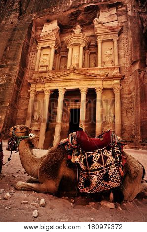 Bedouin camel rests near the treasury Al Khazneh carved into the rock at Petra, Jordan