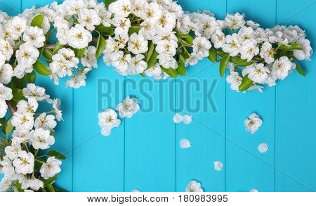 Spring blossom on blue wood background