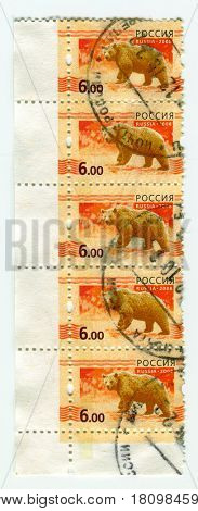 GOMEL, BELARUS, APRIL 5, 2017. Stamp printed in Russia shows image of  The Bears are carnivoran mammals of the family Ursidae, circa 2008.