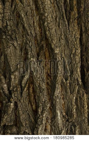 the tree trunk covered with dark brown bark with white strips a background