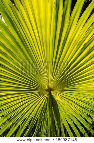 Close-up of a single palm leaf on a sunny day