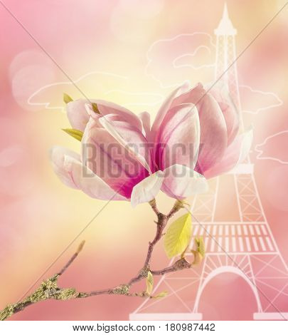 The branch of blooming magnolia against the stylized Eiffel tower. Paris, France