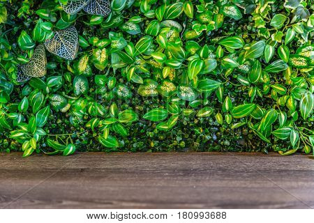 nature green leaf with wood panel for background.