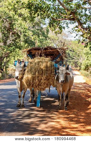 Bullock cart on the old road Sri Lanka vertical view