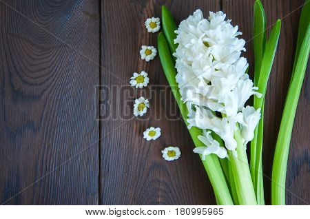 White hyacinth and little chamomile flowers on a wooden background. Close up and copy space.