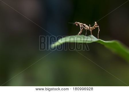 Small Insect Standing On A Leaf