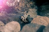 Grey crab with exoskeleton and claws pincers sitting in sunshine on wet rocky seashore rock or stone in sea or ocean water on sunny day on blurred natural background poster
