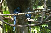 couple of parrots at animal kingdom park in orlando, florida, u.s.a. poster