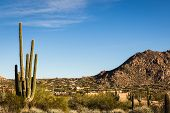 Arizona desert landscape with saguaro cactus or cactii and bushes in the Sonoran Desert. poster