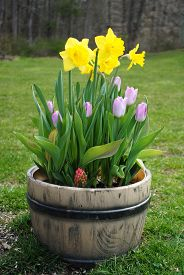 Spring Flowers Planted in a Garden Container