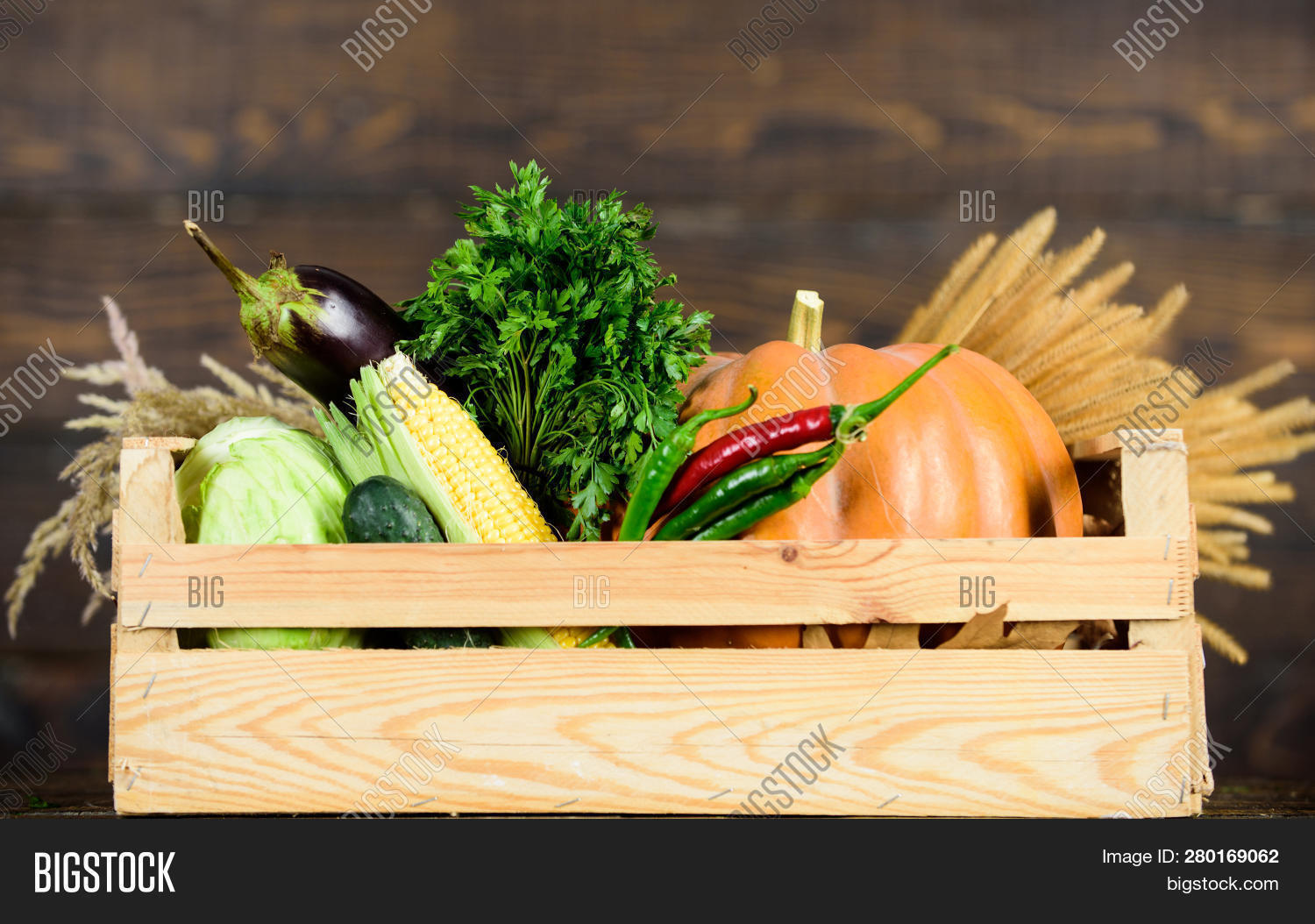 Excellent Quality Image & Photo (Free Trial) | Bigstock
