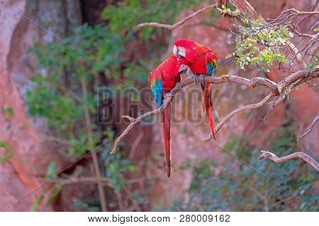 Red And Green Macaws, Ara Chloropterus, Buraco Das Araras, near Jardim and Bonito, Pantanal, Mato Grosso do Sul, Brazil, South America poster