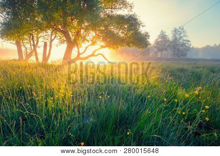 Spring Meadow. Spring Sunny Landscape. Vivid Sunshine In May Morning. May Nature. Spring Background.
