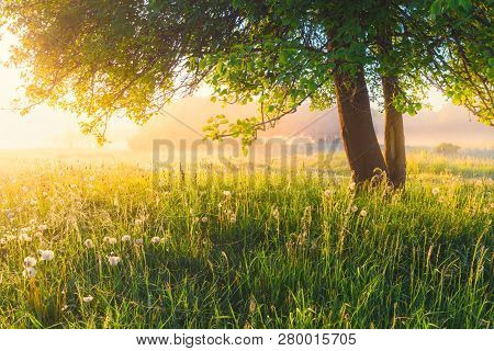 Spring In Park. Spring Landscape. Spring Scenic Background. Fresh Grass On Meadow With Green Tree An