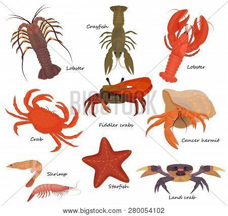 Crustacean Vector Crab Prawns Ocean Lobster And Crawfish Or Crayfish Seafood Illustration Crustacean