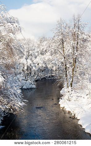 River And Trees In The Snow On The Shore