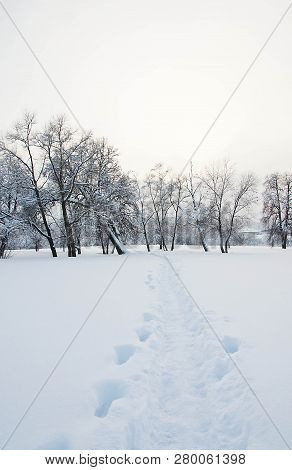 Trees Under The Snow And Snowy Path
