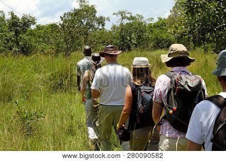 A Group Of Tourists Walk Single File Following A Local Guide On Safari In Ziwa Rhino Sanctuary, Ugan