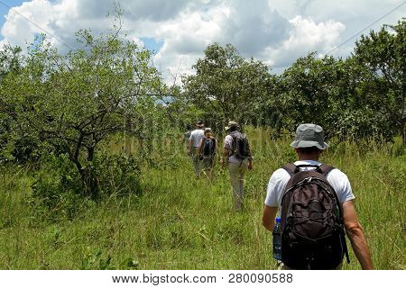 A Line Of People Following The Guide On A Walking Safari To See Rhinoceros In Ziwa Rhino Sanctuary