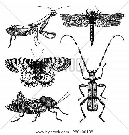 Vector Collection Of High Detailed Insects Sketches. Hand Drawn Butterflies, Beetles, Dragonfly, Cic