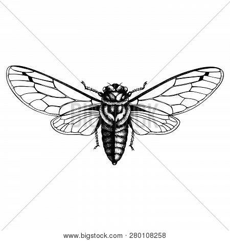 Cicada_1