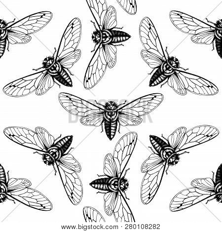 Cicada_pattern_2