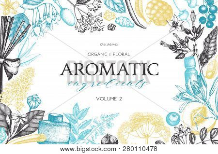 Vector Hand Drawn Perfumery And Cosmetics Ingredients Illustration. Aromatic And Medicinal Plant Des