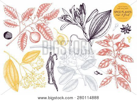 Vector Collection Of  Hand Drawn Spices. Decorative Set Of Aromatic And Tonic Fruits Plants Sketch.
