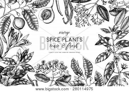 Spice_plants_4_4