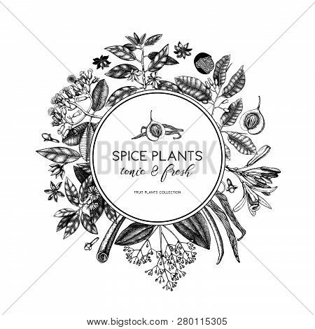 Spice_plants_card_6