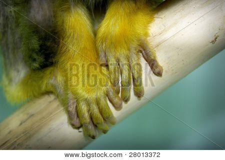 monkey's arm poster