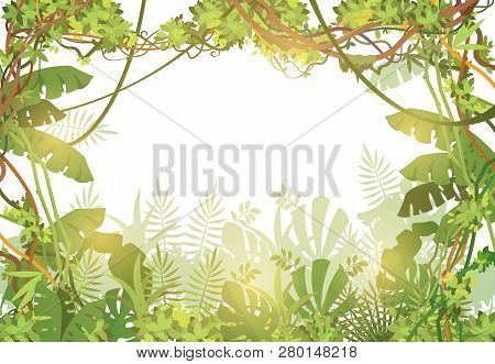 Jungle Tropical Background. Rainforest With Tropic Leaves And Liana Vines. Nature Landscape With Tro