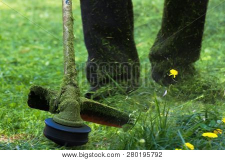 Crazy Grass Cutting In The Park With Gasoline Trimmer. Head With Nylon Line Cutting Grass And Dandel
