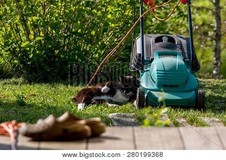 Outdoor Shot Of Green Lawnmower And Cat. Electric Lawn Mower In Green Grass. Cat Sleeping Near Elect