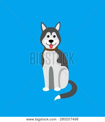 Dog Siberian Husky, Doggish Animal Mammal Pet Vector. Purebred Domesticated Canine, Canis Lupus Fami