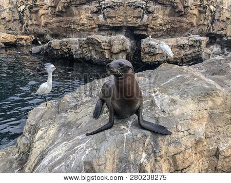 lions on the sunny day. sea, lion, lions from the sea, sea lions, lions of the sea,  wild California sea lion on the cliffs of la jolla