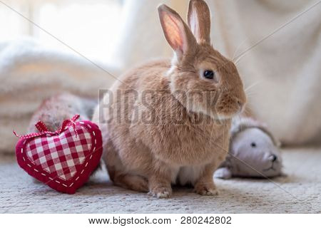 Rufus Rabbit With Heart In Vintage Setting, Soft Natural Tones