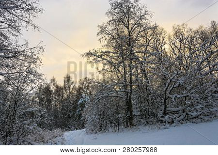 Winter Landscape With Snow-covered Trees On A Frosty December Day.
