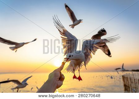 Girl Feeding Food A Seagull In Flight By Hand.gull Bird Flying Hover Come Around To Eat On Beautiful