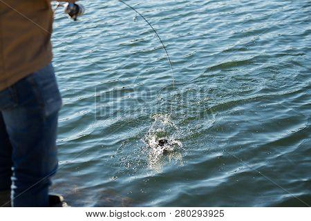 Trout Fishing On A Lake. Sports Fishing