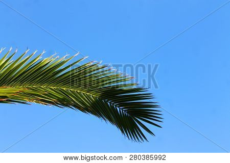 Schöner, Grüner Palmenwedel Vor Strahlend Blauem Himmel