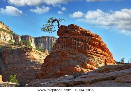 "The famous round rock of red sandstone and with a little ""jerky"" tree.Zion  National Park, sunset poster"